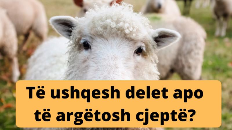 A duhet të ushqejmë delet apo të argëtojmë cjeptë?