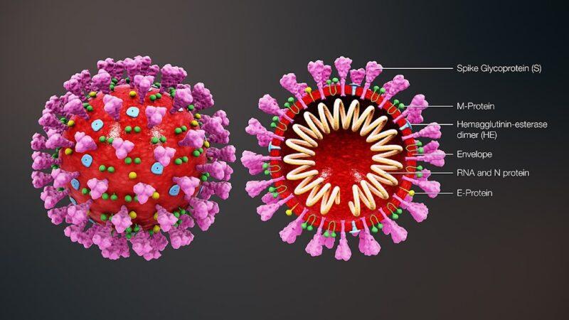 Dy gjëra që ka bërë Pandemia e Koronavirusit